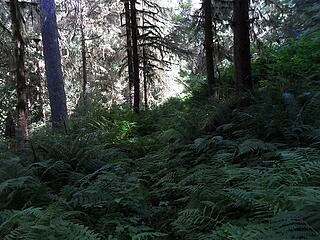 more fern covered trail