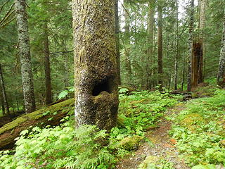 A tree with a mouth!