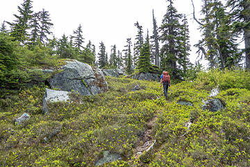 The way trail continued intermittently most of the way up the ridge