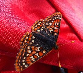 A new friend, Koppen Mt trail