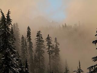Columbia, trees & fog