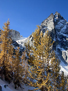 Larches in front of Dragontail in the Enchantments near Aasguard Pass