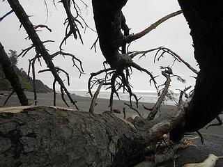Kalaloch Beach 3 051619 05