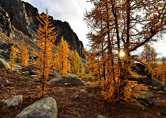 It's larch season