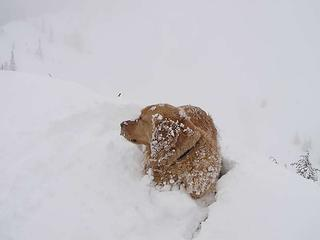 Snow mole - there seems to be a theme!