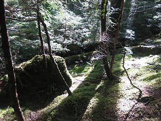 sunlit forest floor