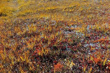 colorful meadow grass