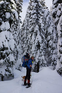 The Commonwealth Basin snowshoe immediately enters beautiful forest