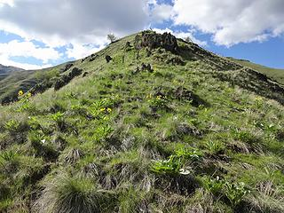 Balsamroot and other flowers are showing on the ridge.