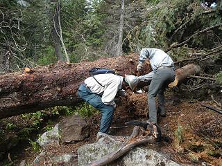 4. MikeL & KarlK chopping out mistletoe
