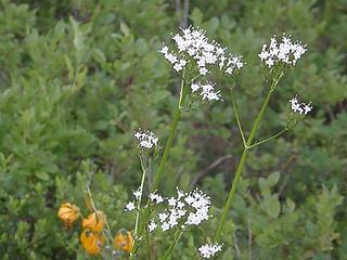 Flowers on Crystal Peak trail.