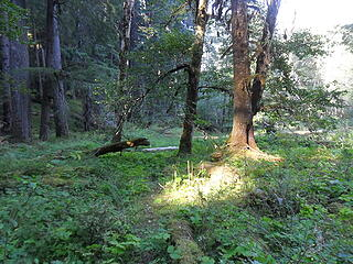 """The trail drops down several """"tables"""", descending 20-50' to the next flat area."""