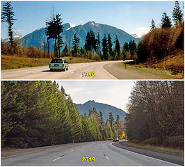 Trees grow fast in Washington. View of Mount Si from the same I-90 curve 29 years apart.