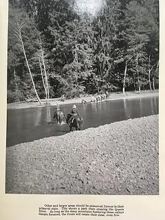 Queets River pack train 1938 02