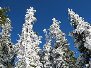 I really like frosty trees