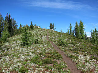 Trail to the summit