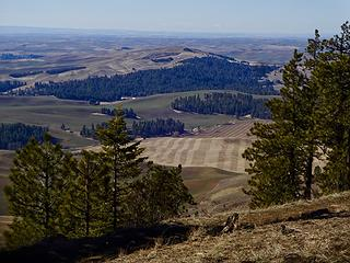 Smoot Hill. This area is being restored to native Palouse Prairie habitat by WSU.