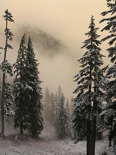 Hillside in the mist