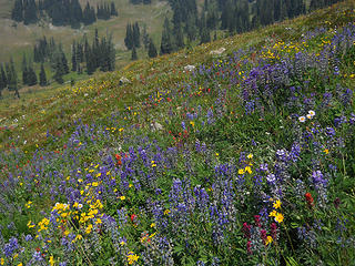 Wildflowers, PCT north from Slate Peak 7/30-8/1/17
