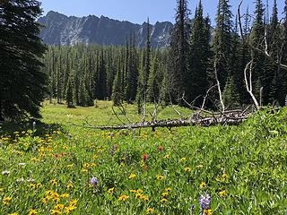 Meadow below Bigelow Ridge